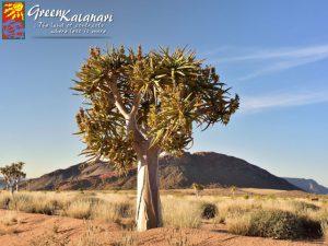 Upington Green Kalahari | Green Kalahari Tourism